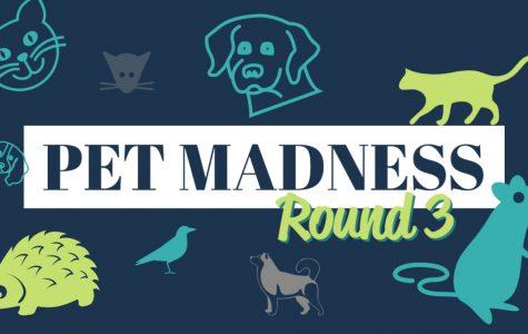 Pet Madness Round 3