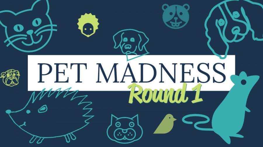 Pet Madness Round 1