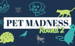 Pet Madness Round 2