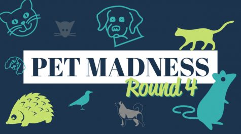 Pet Madness Round 4