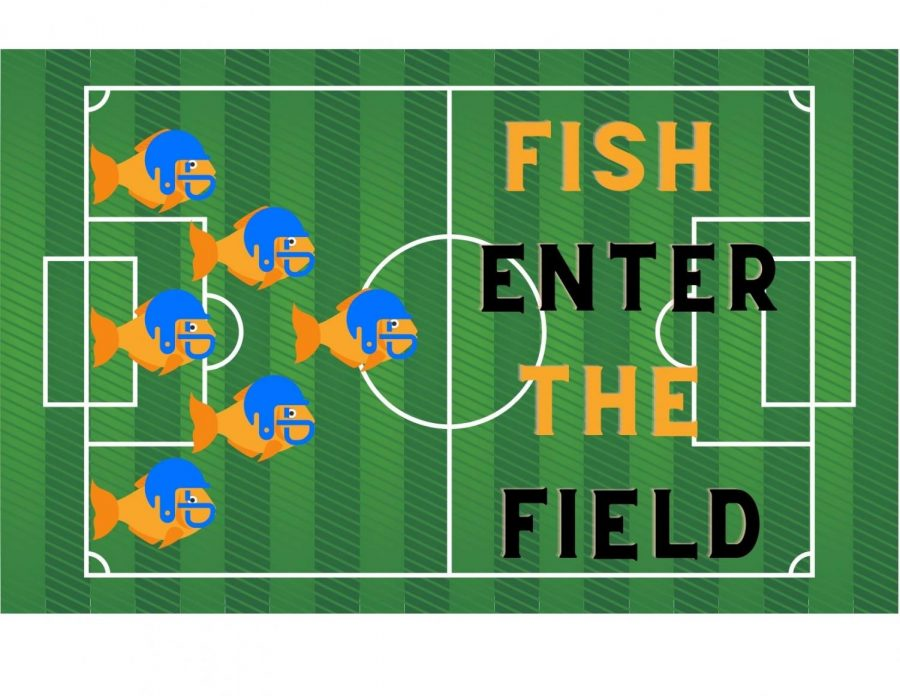 Fish Enter The Field