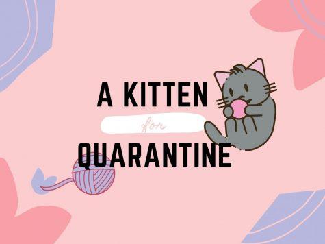 A kitten for quarantine